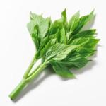 明日葉 夏に食べたい体に良い野菜 NO.1獲得!
